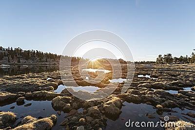 Alpine Bog Sunrise