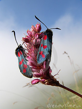 Free Alpine Butterflies Royalty Free Stock Photography - 276877