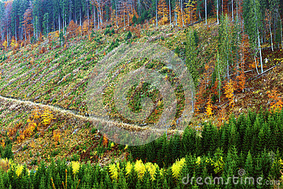 Alpine Deforestation