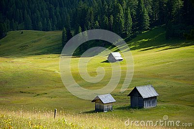 Alpine Field