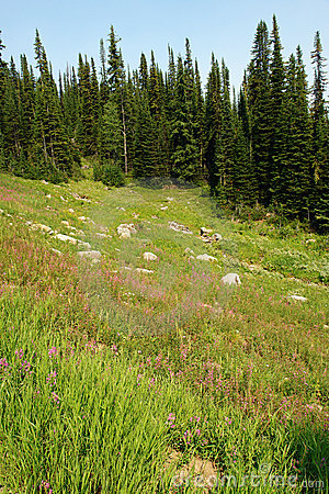 Free Alpine Forest And Meadow Stock Image - 4959321