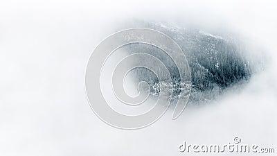 Alpine Forest Through Fog Free Public Domain Cc0 Image