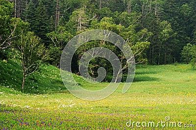 Alpine grasslands