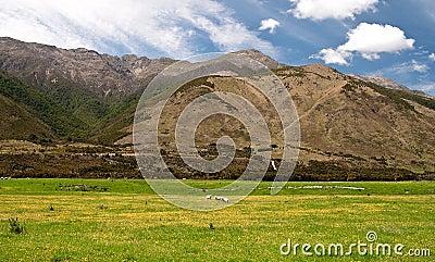 Alpine green meadow