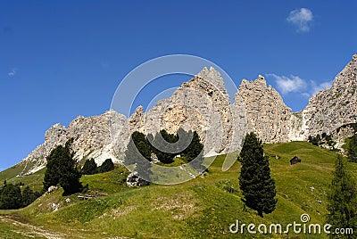 Alpine green, summer landscape