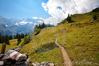 Alpine hiking trail through meadow