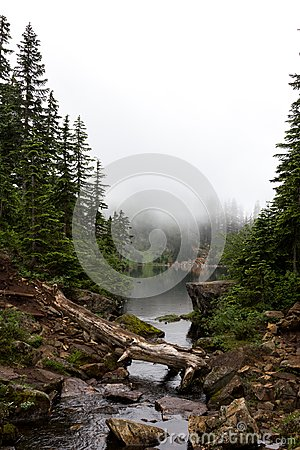 Free Alpine Lake Surrounded By Fog And Conifer Trees Stock Photo - 102973430