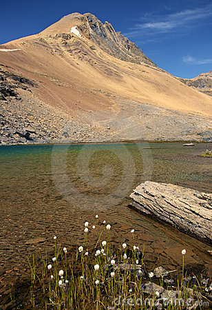 Alpine Lake and White Flowers
