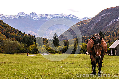 Alpine landscape with galloping horse.