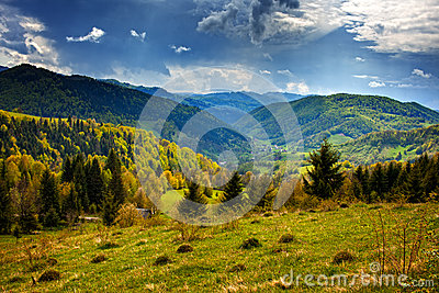 Alpine landscape with pine forests