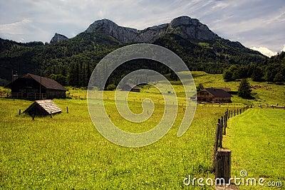Alpine meadow under Schafberg