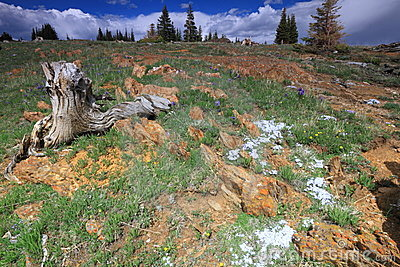 Alpine meadows in Wyoming
