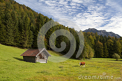 Alpine pasture in Bavaria
