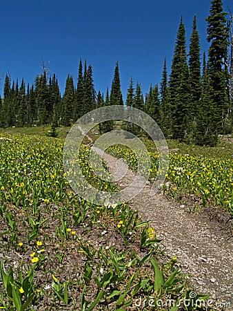 The Alpine Trail