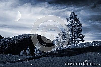 Alpine Trees and Moon