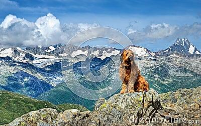 Alpiner Hund