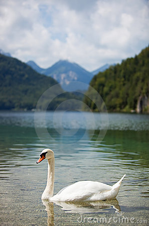Free Alps Lake With Swan Stock Photo - 14120910