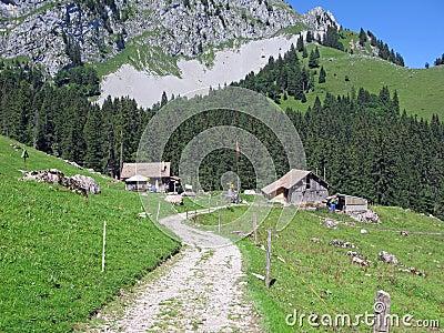 Alps view