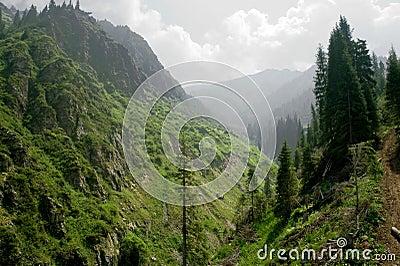 Alps wild