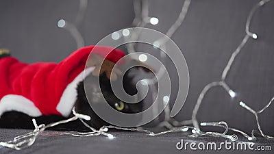 Als Weihnachtsmann gekleidete, schwarze und gestreifte Katzen kommunizieren auf dem Hintergrund einer Weihnachtsgarage stock video