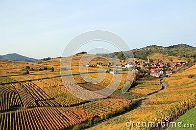 Alsatian village in the vineyard