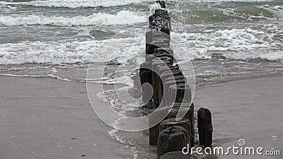 Alt ruinierte Holzpfäppchen auf den Pfählen des Strandes und der Wellen, zoomen Sie aus stock footage