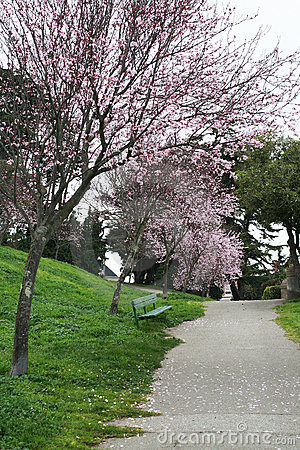 Alta Plaza Park in blossom