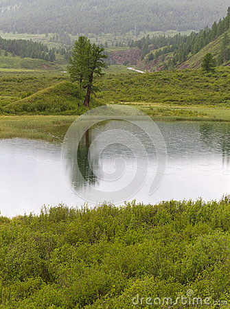 Altai mountains lake tree