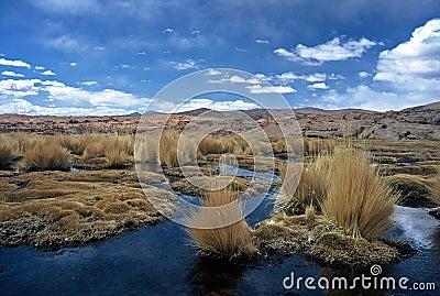 Altiplano in Bolivia,Bolivia
