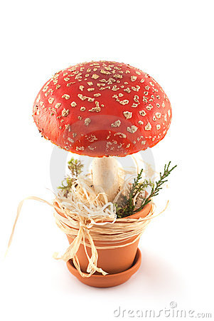 Free Amanita In Pot Stock Photos - 16439863