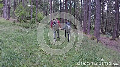 Amantes românticos do homem novo e da mulher que andam atividade recreacional junto de exploração da viagem da floresta no concei video estoque