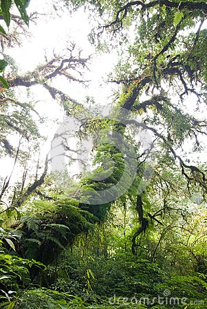 Amazing ancient tree cover with moss and fern