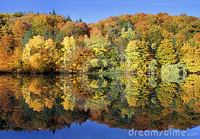 Amazing autumn forest reflected in a calm lake