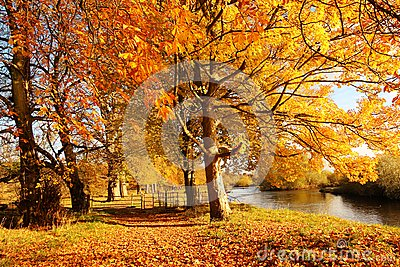 Amazing autumnal trees in the park of Scotland
