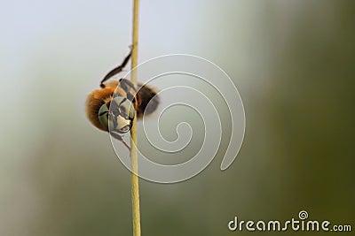 Amazing bee look