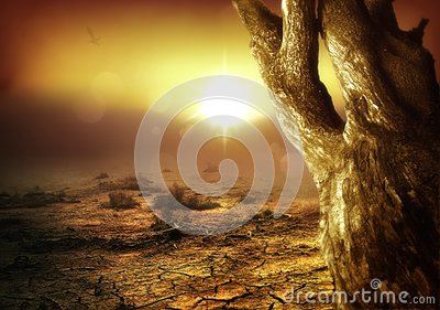 Amazing Desert Scene
