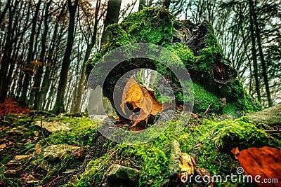 Amazing Fall Forrest