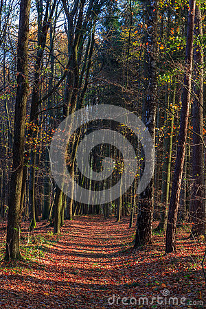 Amazing Fall Forrest.