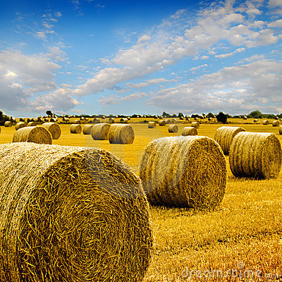 Free Amazing Golden Hay Bales Stock Images - 6657404