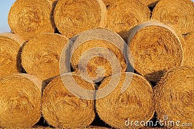 Amazing Golden Hay Bales