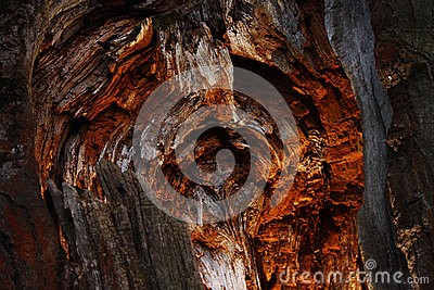 Amazing hollow in tree