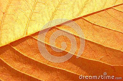 Amazing leaf texture