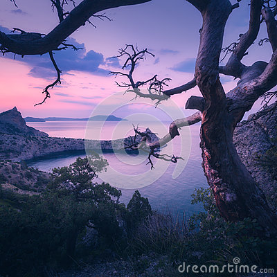 Free Amazing Old Tree In Crimean Mountains At Sunrise Stock Photography - 98757222