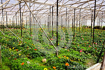 Amazing repetitive greenhouse field structure