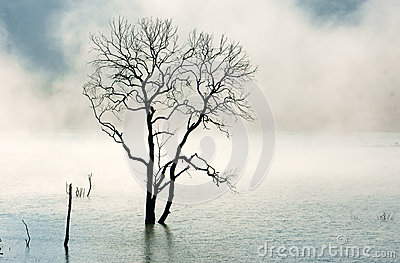 Amazing scene, nature with dry tree, lake, fog