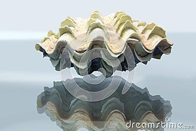 Amazing tridacna