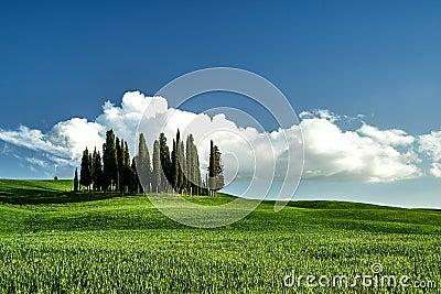 Amazing Tuscany landscape. Green grass, blue sky, cypress trees Stock Photo