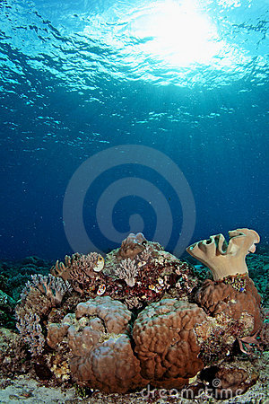 Amazing underwater seascapes