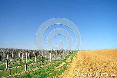 Amazing vineyard