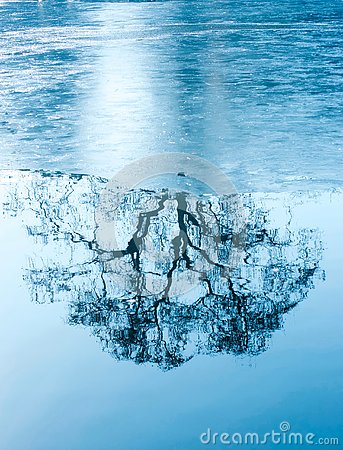 Free Amazing Winter Reflections Of A Tree On A Frozen Lake Stock Photo - 140017420